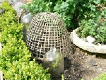 Garden Oriented Gifts - Garden Cloches, made of Bamboo